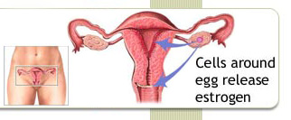 symptoms of a low estrogen levels